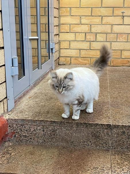 Нашлась кошка, видно домашняя, находится около маг...