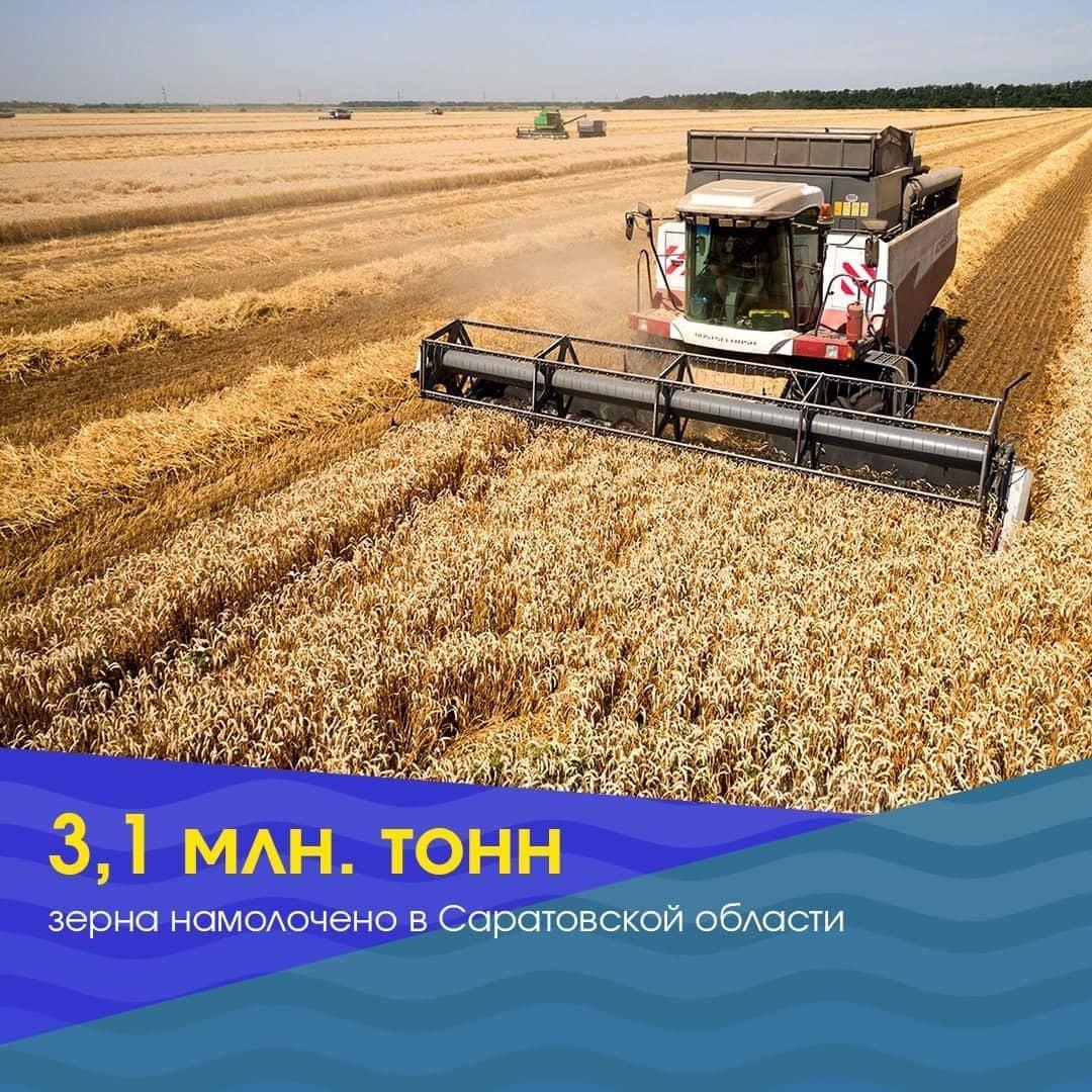 В Саратовской области намолочено 3,1 миллиона тонн зерна