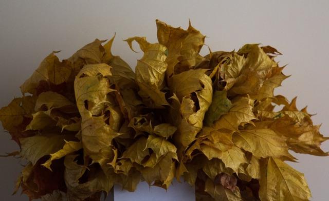 Парафинирование осенних листьев и поделки из них, как сохранить осенние листья с помощью воска, вощение осенних листьев,