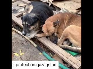 В Алматы скончалась хозяйка приюта для животных. Более 150 питомцев, в приюте, умирали от голода.