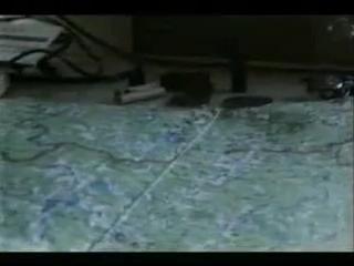 Мясной бор..Военная археология в новгородских лесах, весна, мясной бор. снят в 97, из-за цензуры вышел только сейчас!