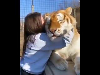 Для тех, кто любит больших котиков 😸