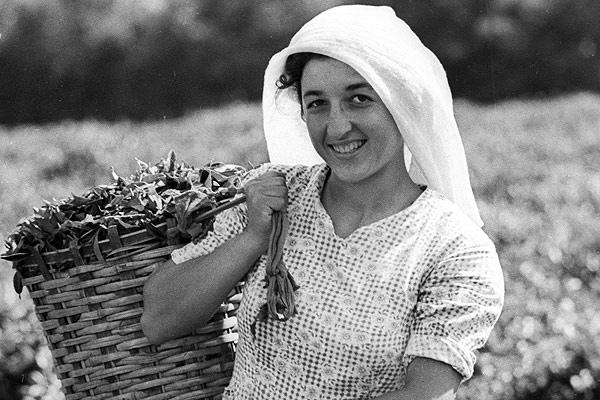 Сборщица чая, Грузия 1968 год