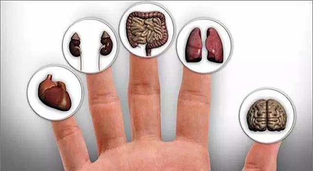 О каких болезнях можно узнать по ногтям., изображение №2