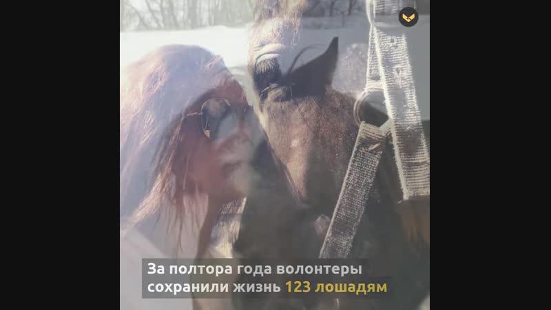 Девушка ветеринар основала организацию которая спасает лошадей с бойни mp4
