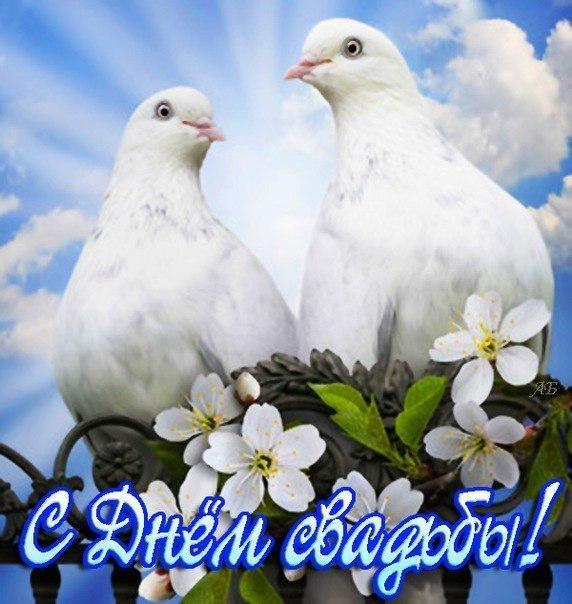 Картинки, открытка свадебная голубки