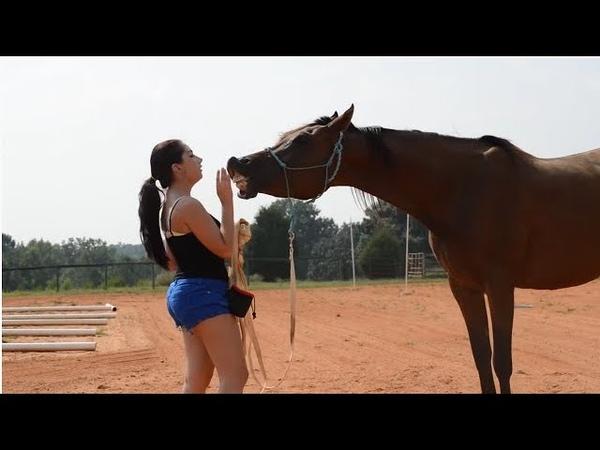 Ponyboy teach a horse to kiss