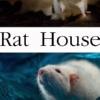 Домик крысы