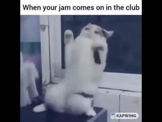 Танцуй, пока молодой!