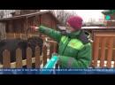 Сюжет про якутскую корову которая живет в Ленинградском зоопарке
