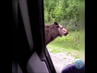 МАМА - ЕСТЬ МАМА! А водитель мог бы и пропустить животных, не беспокоя их.