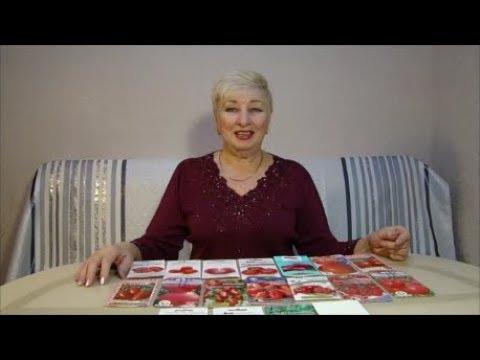 Посеяла семена томатов для выращивания Томатных деревьев и для раннего урожая!!