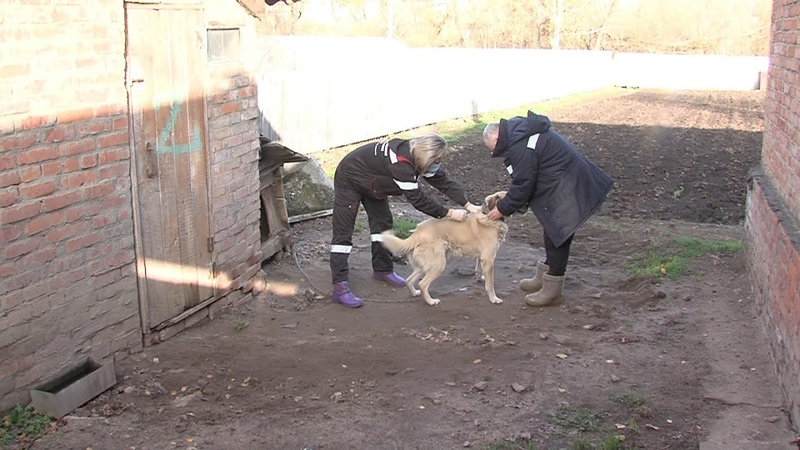 Бесплатную вакцинацию домашних животных от бешенства проводят в городском округе Луховицы