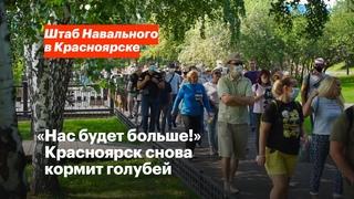 «Нас будет больше!» Красноярск снова кормит голубей